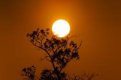 Το φεγγάρι treetop στοκ εικόνα με δικαίωμα ελεύθερης χρήσης