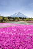 Το φεστιβάλ της Ιαπωνίας Shibazakura με τον τομέα του ρόδινου βρύου Sakura ή το κεράσι ανθίζει με το βουνό Φούτζι Yamanashi στοκ εικόνες