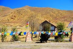 Το φθινοπωρινό τοπίο του οροπέδιου Qinghai - του Θιβέτ Στοκ Εικόνα