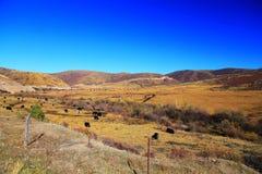 Το φθινοπωρινό τοπίο του οροπέδιου Qinghai - του Θιβέτ Στοκ εικόνα με δικαίωμα ελεύθερης χρήσης