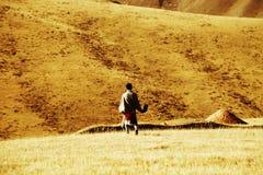Το φθινοπωρινό τοπίο του οροπέδιου Qinghai - του Θιβέτ Στοκ φωτογραφία με δικαίωμα ελεύθερης χρήσης