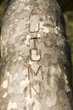 Το φθινόπωρο λέξης χάρασε σε ένα δέντρο Στοκ Εικόνες