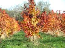 Το φθινόπωρο έχει χρωματίσει το τοπίο στοκ φωτογραφία με δικαίωμα ελεύθερης χρήσης