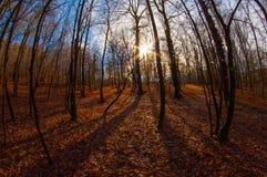 Το φθινόπωρο αναπνέει σε λίγο ξύλο στοκ φωτογραφία