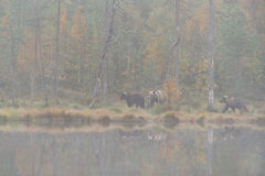 το φθινόπωρο αντέχει τα φλ&u Στοκ Εικόνα