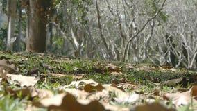 Το φθινόπωρο αφήνει ήπια να κινηθεί στο έδαφος κατά μήκος του αέρα φθινοπώρου τροπικό δασικό σε σε αργή κίνηση φιλμ μικρού μήκους