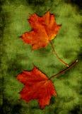 το φθινόπωρο αφήνει δύο Στοκ Εικόνες