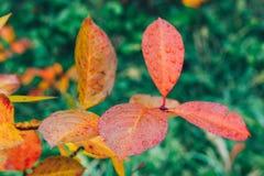 Το φθινόπωρο αφήνει το ζωηρόχρωμο υπόβαθρο στο πάρκο Στοκ Φωτογραφίες