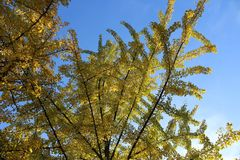 το φθινόπωρο αφήνει κίτριν&omic Στοκ Φωτογραφίες
