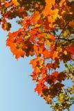 το φθινόπωρο αφήνει κόκκιν& Στοκ εικόνα με δικαίωμα ελεύθερης χρήσης