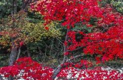 Το φθινόπωρο αφήνει νέο Hasmpshire Στοκ φωτογραφίες με δικαίωμα ελεύθερης χρήσης