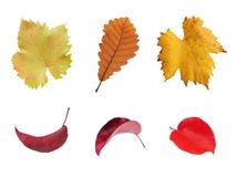το φθινόπωρο αφήνει πολύχρ& Στοκ Εικόνες