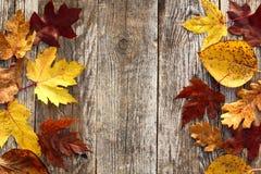 Το φθινόπωρο αφήνει τα σύνορα στοκ φωτογραφίες