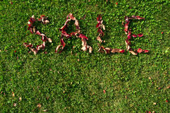 το φθινόπωρο αφήνει την κόκκινη λέξη πώλησης Στοκ εικόνες με δικαίωμα ελεύθερης χρήσης