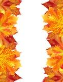 Το φθινόπωρο αφήνει το πλαίσιο πέρα από το λευκό για το κείμενό σας Στοκ εικόνες με δικαίωμα ελεύθερης χρήσης