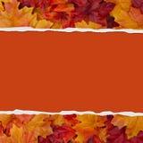 Το φθινόπωρο αφήνει το σχισμένο υπόβαθρο Στοκ Εικόνες