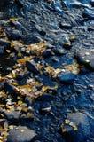 το φθινόπωρο αφήνει το ύδωρ στοκ φωτογραφία