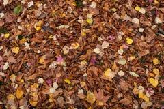 Το φθινόπωρο αφήνει 17 Στοκ Εικόνα