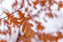 το φθινόπωρο βγάζει φύλλα σε έναν κλάδο στοκ φωτογραφίες