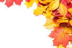 Το φθινόπωρο βγάζει φύλλα στην άσπρη ανασκόπηση Στοκ Φωτογραφίες