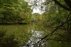 Το φθινόπωρο βγάζει φύλλα στο δασικό βόρειο Λονδίνο Στοκ Εικόνα
