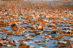 το φθινόπωρο βγάζει φύλλα Στοκ Φωτογραφία