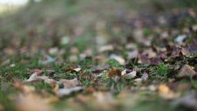 Το φθινόπωρο βγάζει φύλλα τη μείωση φιλμ μικρού μήκους