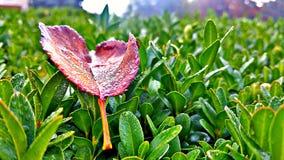 Το φθινόπωρο είναι μαγικό Στοκ εικόνες με δικαίωμα ελεύθερης χρήσης