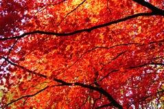 Το φθινόπωρο είναι όμορφο Στοκ εικόνες με δικαίωμα ελεύθερης χρήσης