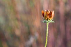 Το φθινόπωρο εξετάζει τη φύση Στοκ Εικόνες