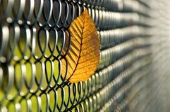 το φθινόπωρο επίασε την άδ&epsi Στοκ φωτογραφία με δικαίωμα ελεύθερης χρήσης
