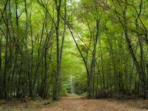 Το φθινόπωρο επιστρέφει στοκ εικόνα με δικαίωμα ελεύθερης χρήσης