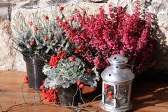 Το φθινόπωρο ερεικών ανθίζει το γραπτό χρώμα με τα κόκκινα λουλούδια Στοκ Φωτογραφία