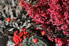 Το φθινόπωρο ερεικών ανθίζει το γραπτό χρώμα με τα κόκκινα λουλούδια Στοκ εικόνα με δικαίωμα ελεύθερης χρήσης