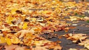 το φθινόπωρο ζωηρόχρωμο βγάζει φύλλα Στοκ Φωτογραφίες