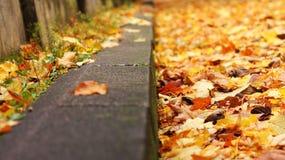 το φθινόπωρο ζωηρόχρωμο βγάζει φύλλα Στοκ Φωτογραφία