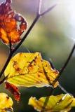 το φθινόπωρο ζωηρόχρωμο βγάζει φύλλα στοκ εικόνες