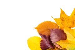 το φθινόπωρο ζωηρόχρωμο βγάζει φύλλα Στοκ εικόνες με δικαίωμα ελεύθερης χρήσης