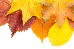 το φθινόπωρο ζωηρόχρωμο βγάζει φύλλα Στοκ εικόνα με δικαίωμα ελεύθερης χρήσης