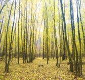 το φθινόπωρο κάλυψε τα πεσμένα δασικά φύλλα επίγειων τοπίων κίτρινα στοκ φωτογραφία με δικαίωμα ελεύθερης χρήσης