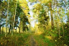 το φθινόπωρο κάλυψε τα πεσμένα δασικά φύλλα επίγειων τοπίων κίτρινα στοκ φωτογραφίες