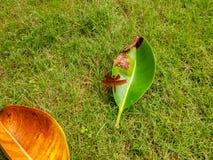 Το φθινόπωρο, λιβελλούλες με τα ελλιπή φτερά στοκ εικόνες με δικαίωμα ελεύθερης χρήσης