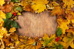 το φθινόπωρο περιέχει το μονοπάτι φύλλων πλαισίων αρχείων Στοκ εικόνες με δικαίωμα ελεύθερης χρήσης