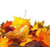 Το φθινόπωρο πολύχρωμο βγάζει φύλλα Στοκ Εικόνες
