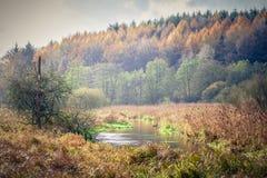 Το φθινόπωρο πουπουλοπαπιών Στοκ Εικόνες