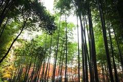 Το φθινόπωρο σε Arashiyama, Κιότο, Ιαπωνία Στοκ φωτογραφία με δικαίωμα ελεύθερης χρήσης