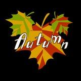 Το φθινόπωρο σφενδάμνου χρωμάτισε τα φύλλα Στοκ εικόνες με δικαίωμα ελεύθερης χρήσης