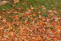 Το φθινόπωρο, τα δέντρα του με τα φύλλα φύλλων των χρωμάτων πράσινη φύση χρώματος ομορφιάς ανασκόπησης Στοκ φωτογραφία με δικαίωμα ελεύθερης χρήσης