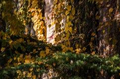 Το φθινόπωρο, τα φύλλα είναι κόκκινα και κίτρινα οπουδήποτε στοκ φωτογραφίες