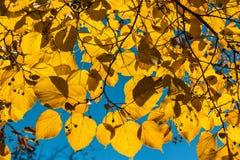 Το φθινόπωρο τα φύλλα Στοκ φωτογραφίες με δικαίωμα ελεύθερης χρήσης